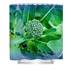 Baby Broccoli - Vegetable - Garden Shower Curtain by Andee Design