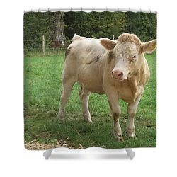 Baby Bull Shower Curtain by John Williams