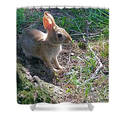 Baby Bunny Shower Curtain by Brian Wallace