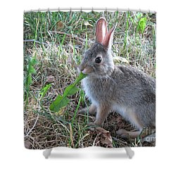 Baby Bunny Eating Dandelion #01 Shower Curtain by Ausra Huntington nee Paulauskaite