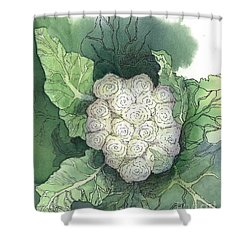 Baby Cauliflower Shower Curtain by Maria Hunt
