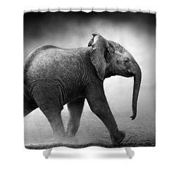 Baby Elephant Running Shower Curtain by Johan Swanepoel