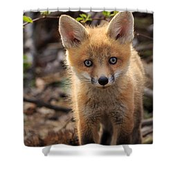 Baby In The Wild Shower Curtain by Everet Regal