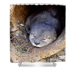Baby Otter Shower Curtain by Mary Deal