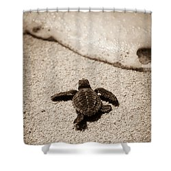 Baby Sea Turtle Shower Curtain by Sebastian Musial