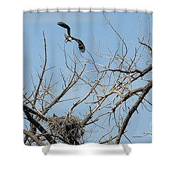 Back To The Nest Shower Curtain by Bob Hislop