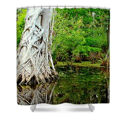 Backcountry Shower Curtain by Carey Chen
