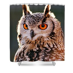 Backlit Eagle Owl Shower Curtain by Roeselien Raimond