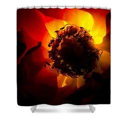 Backlit Flower Shower Curtain by Fabrizio Troiani