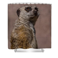Bad Whisker Day Shower Curtain by Ernie Echols