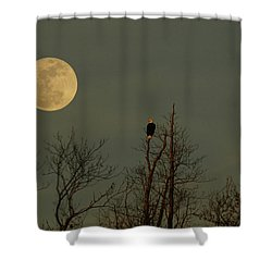 Bald Eagle Watching The Full Moon Shower Curtain by Raymond Salani III