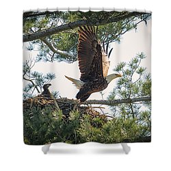 Bald Eagle With Eaglet Shower Curtain by Everet Regal