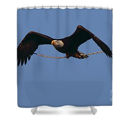 Bald Eagle With Nesting Supplies Shower Curtain by Meg Rousher