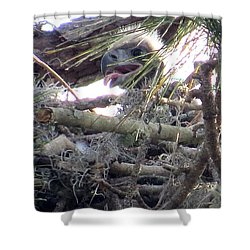 Bald Eagles Chick Shower Curtain by Zina Stromberg
