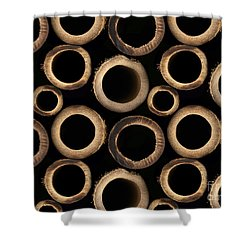 Bamboo Rings Shower Curtain by Bedros Awak