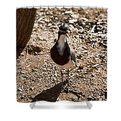 Banded Lapwing Shower Curtain by Douglas Barnard