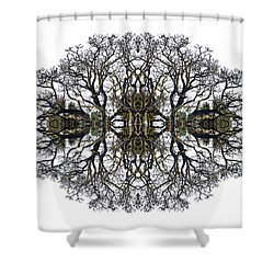 Bare Tree Shower Curtain by Debra and Dave Vanderlaan