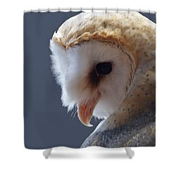 Barn Owl Dry Brushed Shower Curtain by Ernie Echols