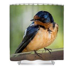 Barn Swallow Shower Curtain by Ernie Echols