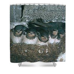 Barn Swallows Shower Curtain by Hans Reinhard