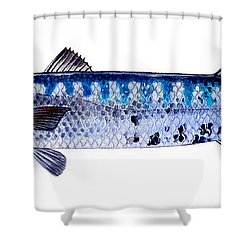 Barracuda Shower Curtain by Carey Chen