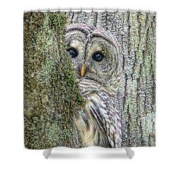 Barred Owl Peek A Boo Shower Curtain by Jennie Marie Schell