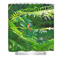 Basking In The Morning Light Shower Curtain by Lynn Bauer