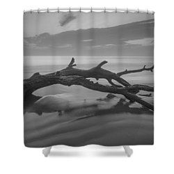 Beach Bones Shower Curtain by Debra and Dave Vanderlaan