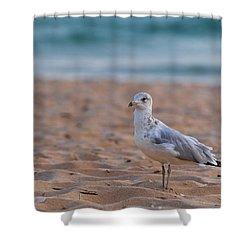 Beach Patrol Shower Curtain by Sebastian Musial