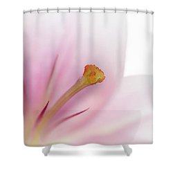 Beautiful Lily Shower Curtain by Melanie Viola