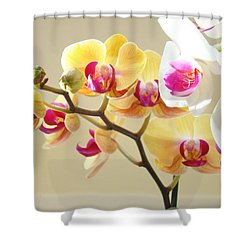 Beautiful Orchids Floral Art Prints Orchid Flowers Shower Curtain by Baslee Troutman