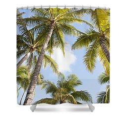 Beautiful Palms Shower Curtain by Brandon Tabiolo