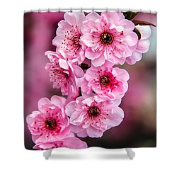 Beautiful Pink Blossoms Shower Curtain by Robert Bales