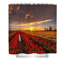 Beautiful Tulip Field Sunset Shower Curtain by Mike Reid