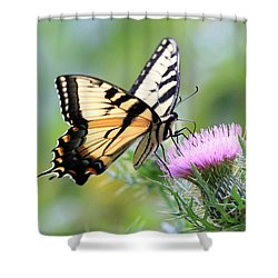 Beauty On Wings Shower Curtain by Geoff Crego