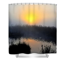 Beaver At Beaver Dam In Morning Shower Curtain by Dan Friend