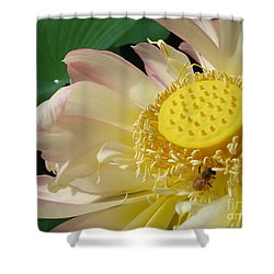 Bee Shower Curtain by Jane Ford