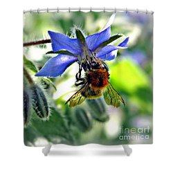 Bee On Borage Shower Curtain by Morag Bates