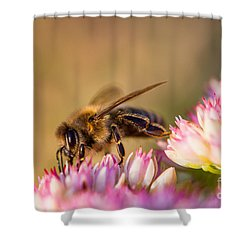Bee Sitting On Flower Shower Curtain by John Wadleigh