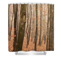 Beech Wood In Autumn Shower Curtain by Anne Gilbert