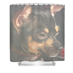 Bella Shower Curtain by Greg Patzer