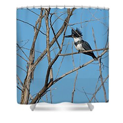 Belted Kingfisher 4 Shower Curtain by Ernie Echols