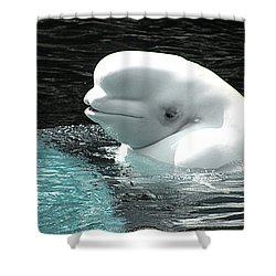 Beluga Whale Shower Curtain by Brian Chase