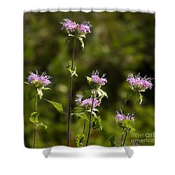 Bergamot Shower Curtain by Steven Ralser