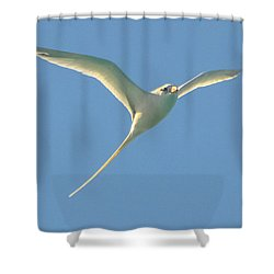 Bermuda Longtail In Flight Shower Curtain by Jeff at JSJ Photography