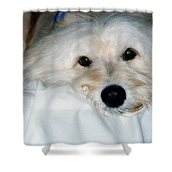 Bessie Eyes Shower Curtain by Randi Shenkman