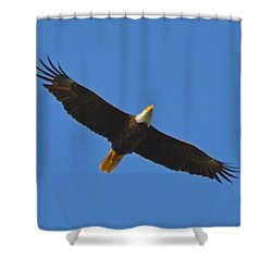Best Soaring Bald Eagle Shower Curtain by Jeff at JSJ Photography