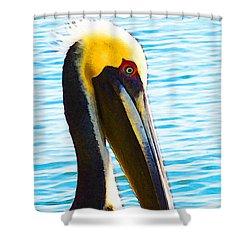 Big Bill - Pelican Art By Sharon Cummings Shower Curtain by Sharon Cummings