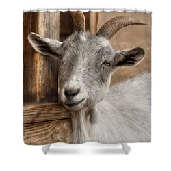 Billy Goat Shower Curtain by Lori Deiter