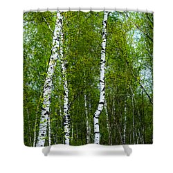 Birch Forest Shower Curtain by Hannes Cmarits